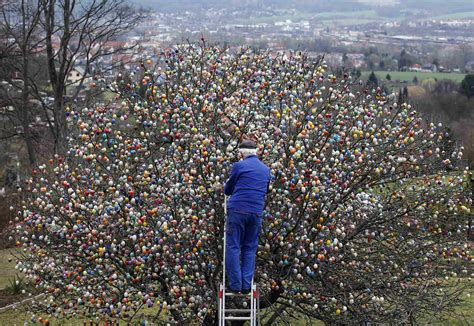 tree tradition 50 year tradition trims tree with 10 000 easter