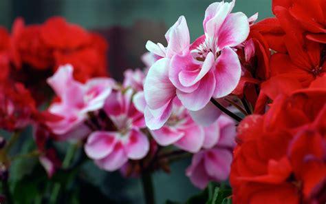Digital High Defination 3D: HD Flower Wallpapers 1080p