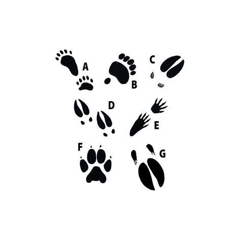 moose rubber st animal tracks printable images