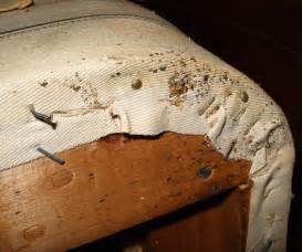 How To Tell If A Hotel Has Bed Bugs How To Search Your Hotel Room For Bed Bugs Wired