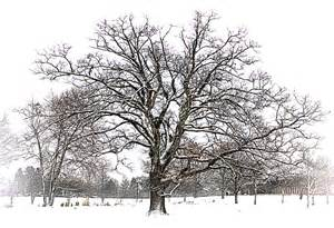 winter tree winter tree edward photography journal 2013