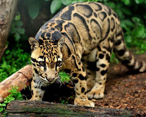 imagenes de animales extinguidos animales extinguidos www pixshark com images galleries