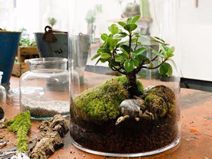 garten im glas garten im glas mini biotop f 252 rs wohnzimmer gestalten