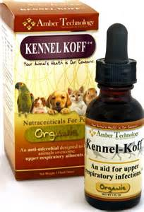 kennel cough home remedies about kennel cough and its remedies care corner