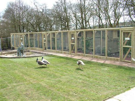 backyard zoo new pheasant aviaries at blackbrook apr 09 187 blackbrook