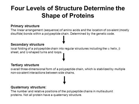 4 protein structure levels protein structure and function part i ppt