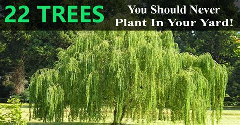 How To Plant A Garden In Your Backyard by These 22 Trees You Should Never Plant In Your Yard