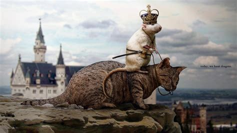 cat rat wallpaper mouse cat funny animal hd wallpaper of animals