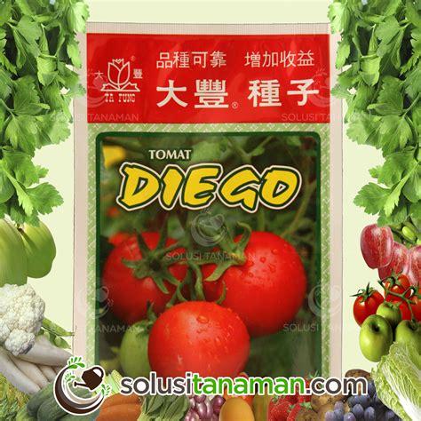 Benih Kangkung Bangkok 1 500 Butir bibit sayur buah solusi tanaman