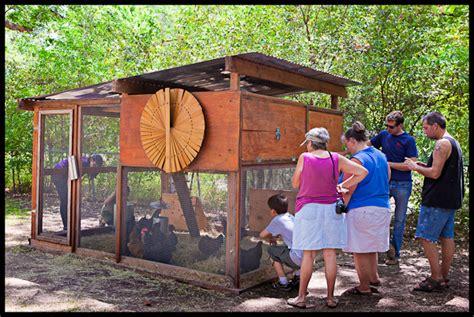 austin backyard chickens urban chicken farming backyard chickens in austin texas