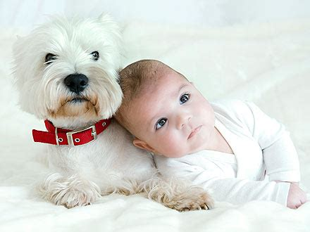 babies and dogs babies who live with dogs healthier study finds