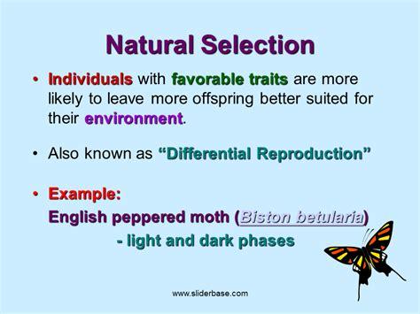 what is natural section natural selection presentation evolution sliderbase