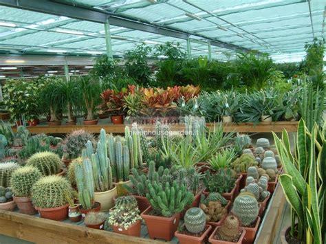 piante ricadenti da interno piante ricadenti da appartamento pianta da appartamento