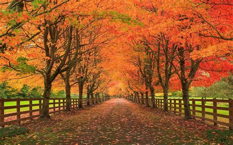 wallpaper trees landscape fall leaves nature grass