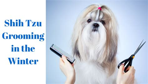 shih tzu grooming needs health fitness for dogs