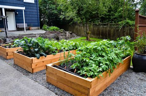 vegetable garden in backyard backyard vegetable garden