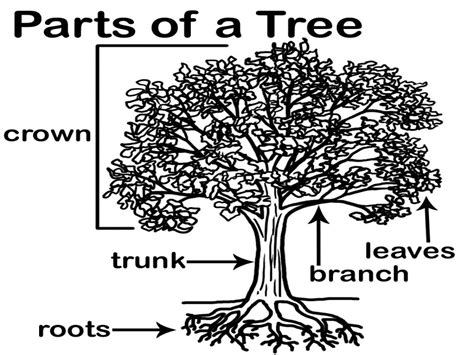 parts of a tree diagram clipart parts of a tree collection pressauto net