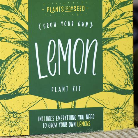 grow your own tree kit grow your own lemon tree plant kit by plants from seed notonthehighstreet