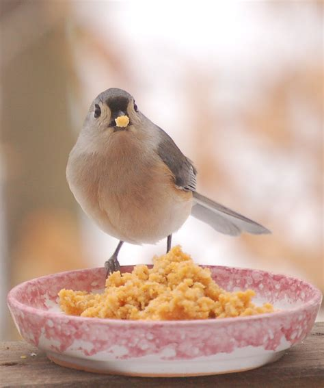 heather of the hills who loves homemade bird food