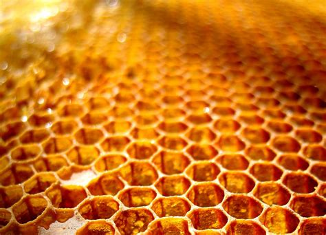 Honey Comb Honeycomb honeycomb recipes dishmaps