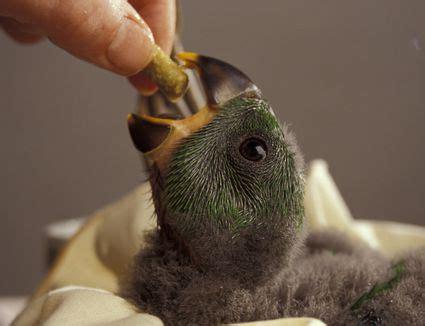 feed  pet bird people food