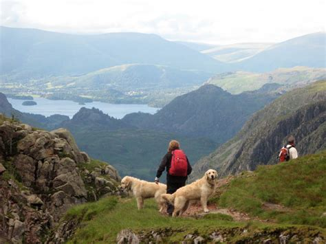 Cottages To Rent In Lake District With Dogs by Lake District Cottages Bringing Your Best Friend