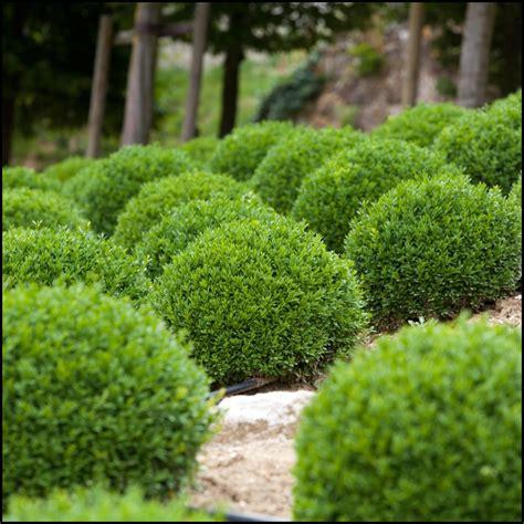 maintenance shrubs  landscaping  garden