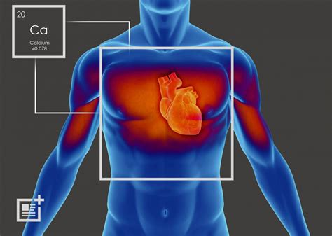 What should i keep my heart rate at to lose weight