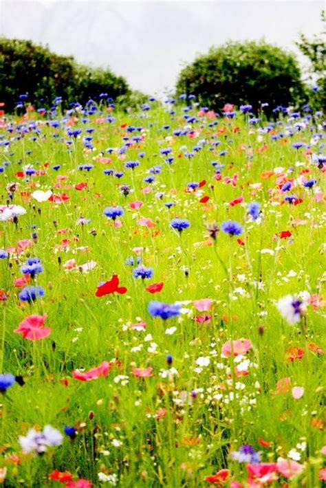 imagenes hermosas fondo de pantalla im 225 genes para fondos de pantalla de paisajes de primavera