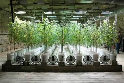 cultivo interior pansiiitt cultivo interior de marihuana