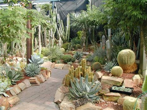 landscaping with succulents cacti succulents landscaping with rocks and cacti