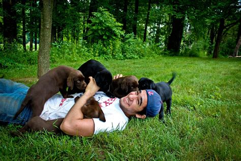 play with puppies 21 adorable dads with their pups happy s day