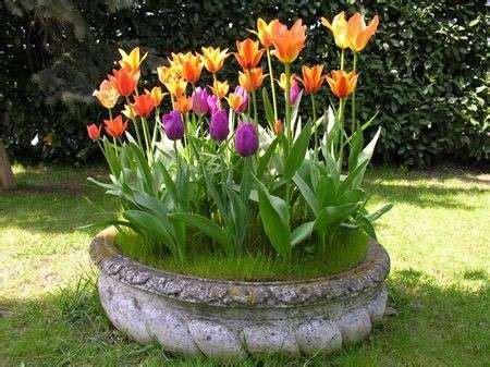 vasi per tulipani i tulipani foto 4 7 pourfemme