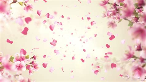 Cherry Blossoms Or Sakura On The Tree Videos De Metraje En Stock 8583835 Shutterstock Falling Flower Petals After Effects Template Free