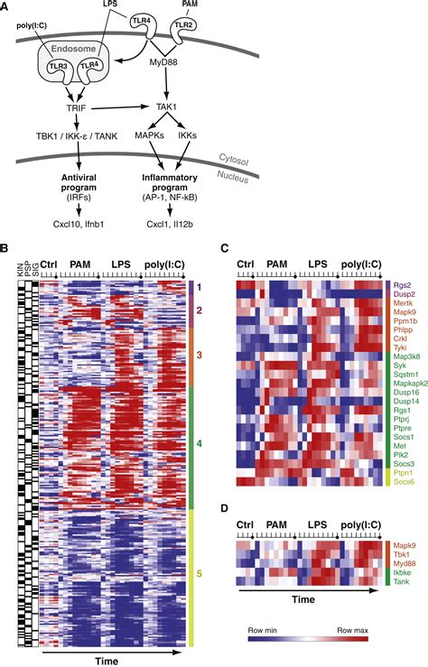 pattern recognition receptors and inflammation takeuchi systematic discovery of tlr signaling components