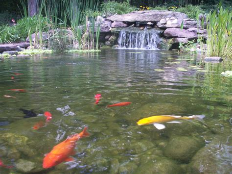 large backyard ponds large garden pond designs