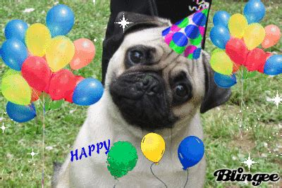 happy birthday pug images happy birthday pug picture 126848214 blingee