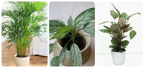 indoor plants indirect sunlight 12 best plants that can grow indoors without sunlight