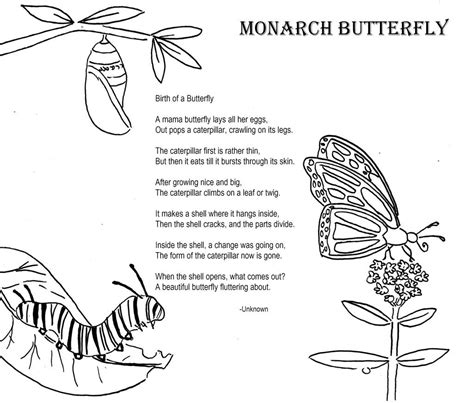 butterfly life cycle coloring sheet homeschool monarch butterfly coloring poem home school ideas