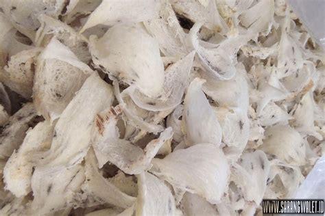 Sarang Burung Walet Plastik Putih mengenal jenis sarang burung walet di indonesia