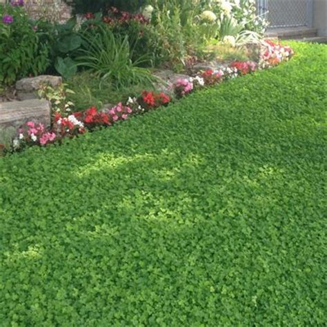 beautiful No Grass Backyard Ideas #2: 9a08a4f1afdbe3ff102102ad3e40461b--lawns-divorce.jpg