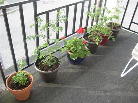Balcony garden update cakes tea and dreams