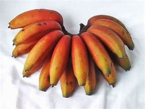 types of bananas red banana quot when we travel we get to experience different kinds of fruits and