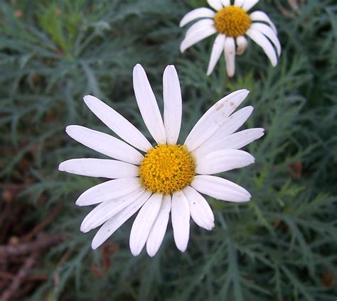 10 Most Flowers For by Top 10 Most Popular Flowers Flowers Gardening