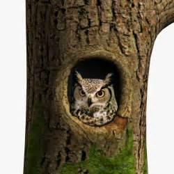 Promo Code For Ballard Designs 28 pics photos owl tree with 022 barn owl in tree