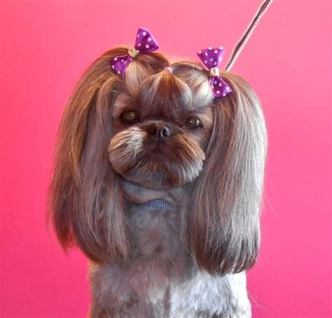 list of shih haircut 54 best images about shih tzu grooming hairstyles on