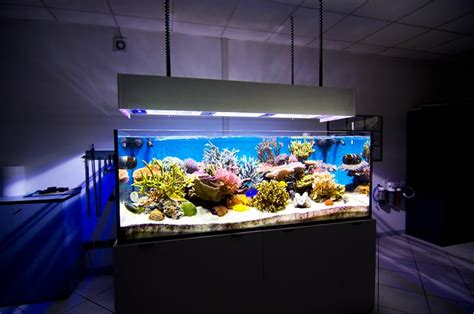 Lu Aquarium Recent paolo piccinelli s 340 us gallon reef aquarium gruppo
