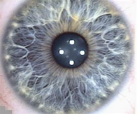 flower pattern eyes my eye diagrams expressing your truth blog