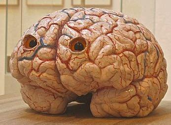 Modèle Cerveau