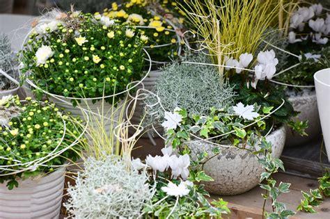 winterharte pflanzen f 195 188 r den balkon home interior - Winterharte Pflanzen Für Balkon